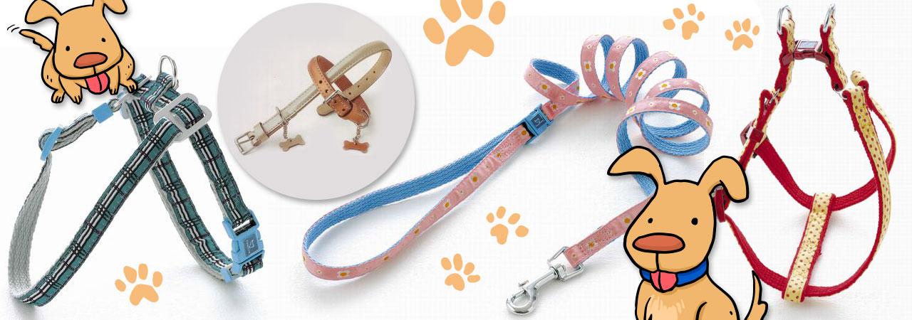 colliers, laisses et harnais pour chien