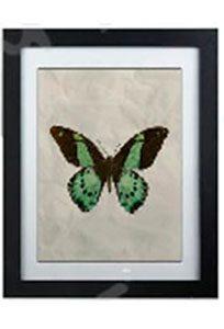 image encadrée papillon vert