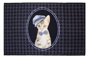 chaton casquette gavroche