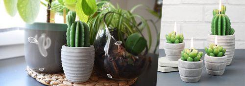 bougies cactus dans leur pot en céramique