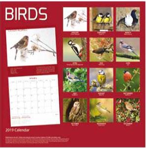 calendar birds 2019