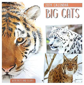calendrier 2019 gros chats big cats