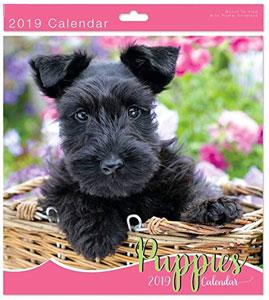 calendrier 2019 puppies chiots mignons