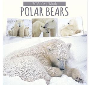 polar bears ours polaires calendrier 2019