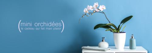 Orchidées dans leur pot en céramique